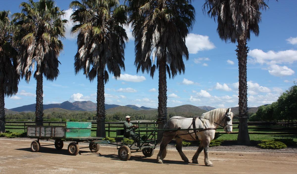 Gelding and farm cart web