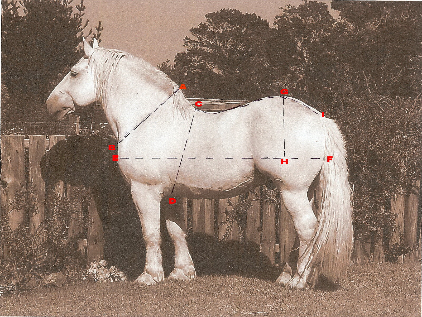 How to measure a horse to harness