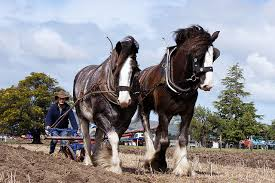 Shires ploughing 2